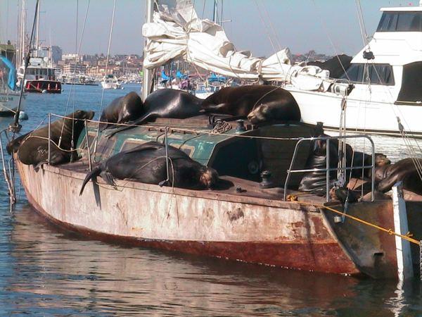 THE SAILING SHIP Jan De Hartog PETER SPIER Odyssey 1964 B16 PL