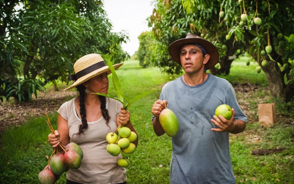 Fruit Hunters 2