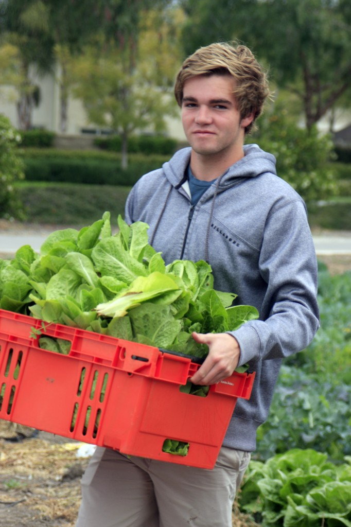 A National League of Young Men, Newport Mesa, volunteer carries a cart full of freshly picked vegetables to be distributed to the needy in Orange County.