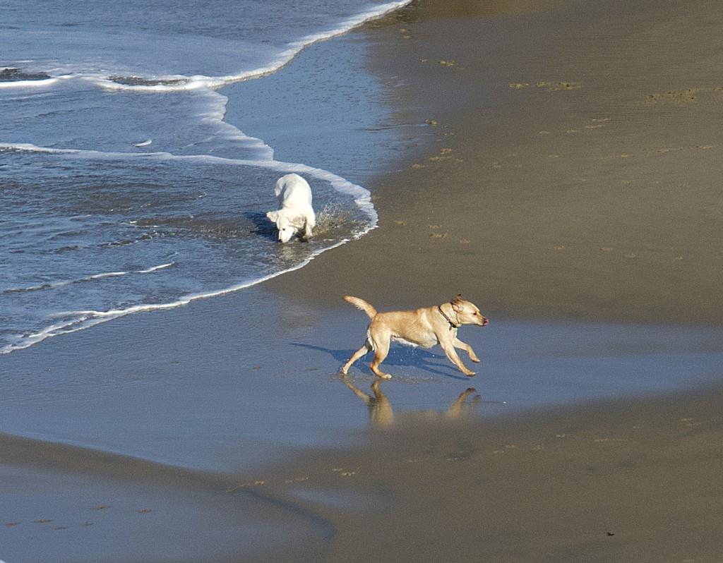 Dogging it...Main Beach, Corona del Mar, — Photo by Lawrence Sherwin