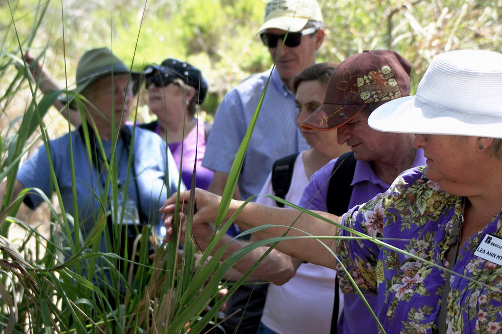 The group of blind and visually impaired adults, along with volunteers from the Braille Institute and Crystal Cove Alliance, feel some brush along the trail on Wednesday.