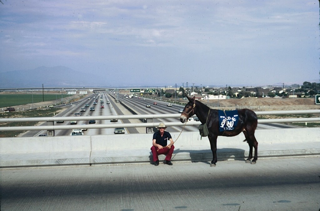 Dave Kunst stuck in an Orange County intersection with a stubborn mule on the last leg of his journey.