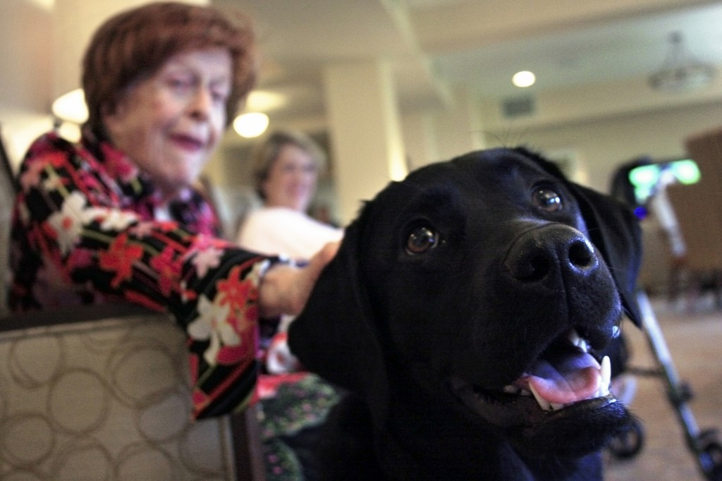 Raja, 8-month-old guide dog in training, with senior residents at Crown Cove senior living community in Corona del Mar. — Photos by Sara Hall