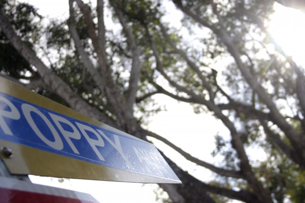 eucalyptus tree Poppy