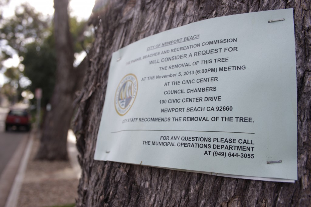 A sign posted on the tree at 621 Poppy Avenue. — Photo by Sara Hall