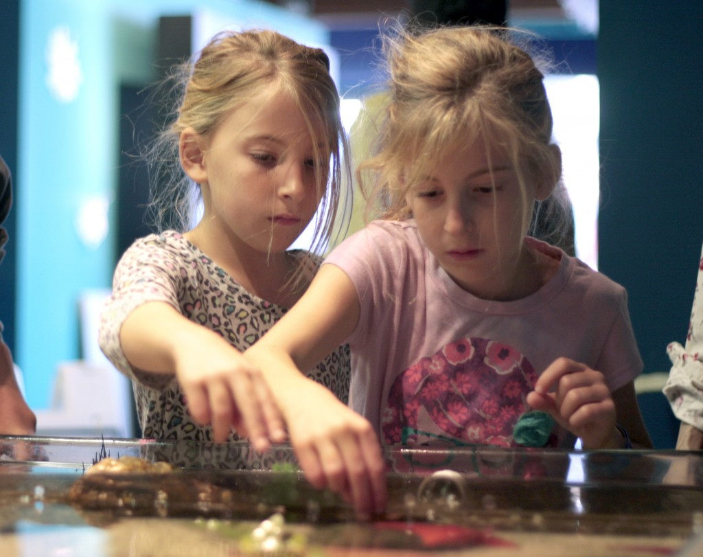Kids have fun with the Touch Tank at Explor Ocean Wednesday after they painted storefront windows around town.