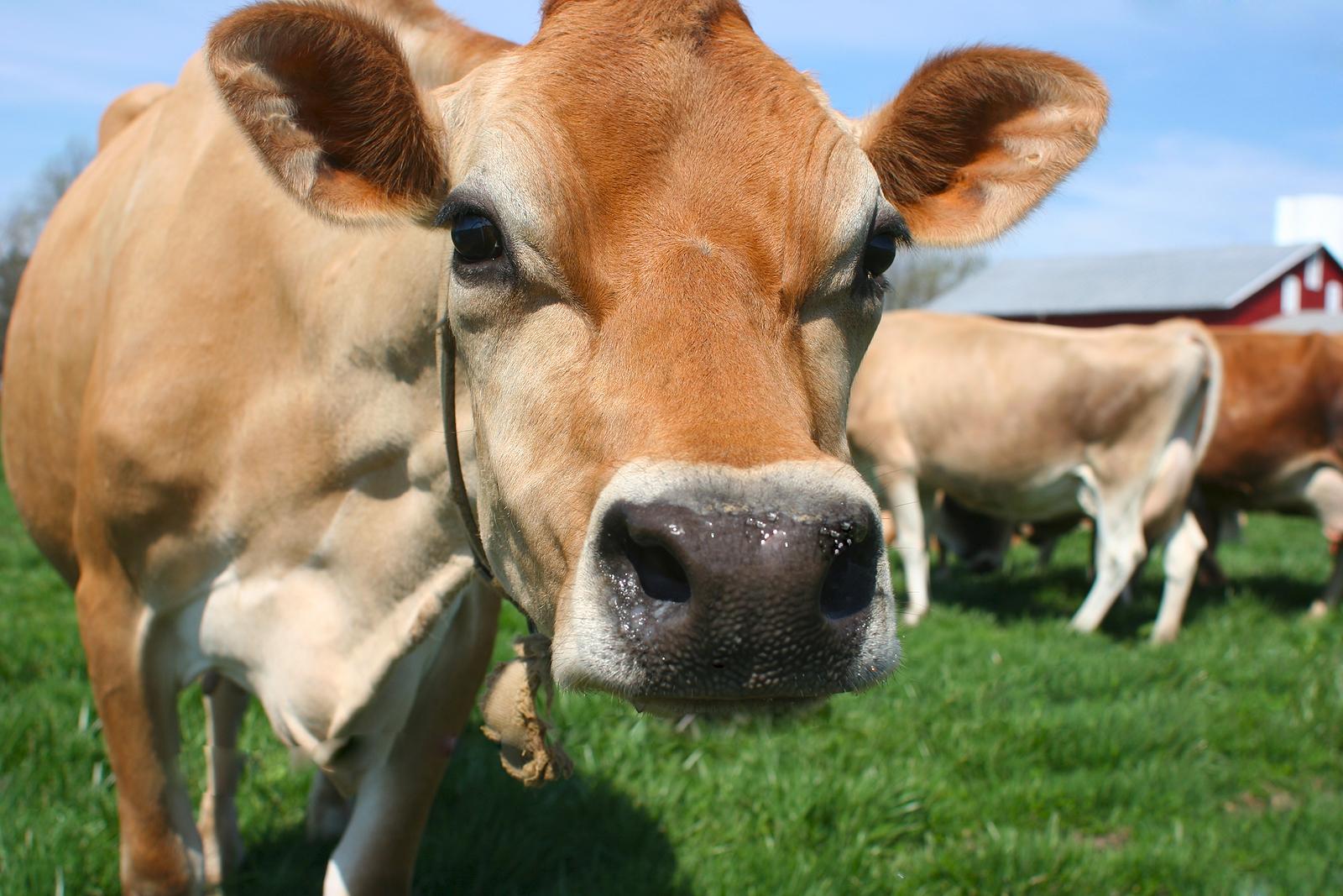 Moment For Health Got Milk Newport Beach News