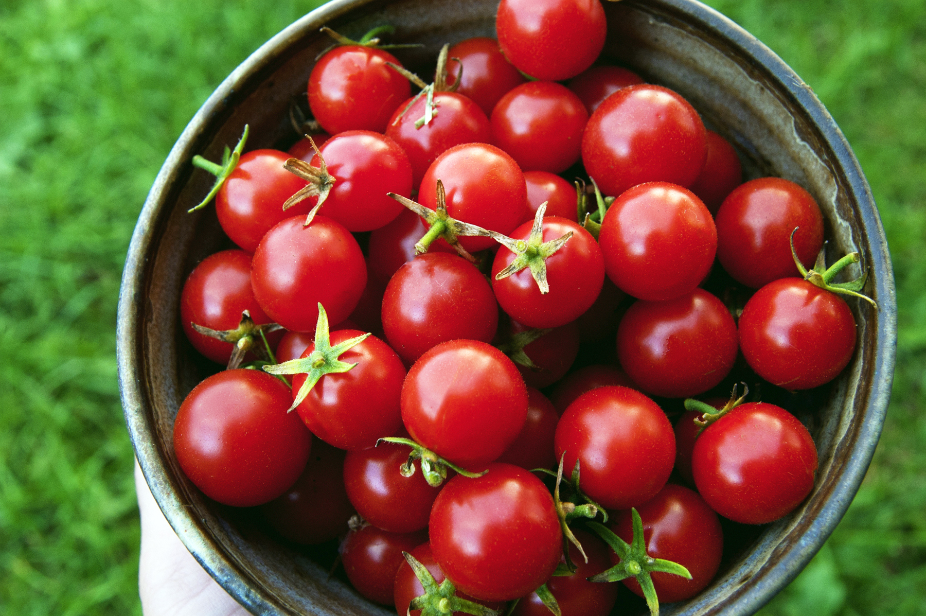 Home & Garden: Juicy Insider Info on Tomatoes - Newport ...