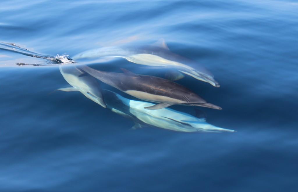 Perri Wooding Dolphin2