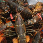 6th Annual Lobsterfest Comes to Newport Dunes August 10