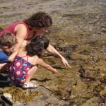 Summer Fun: Exploring Little Corona Tidepools