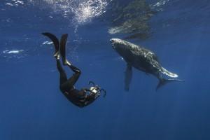 11_humpback