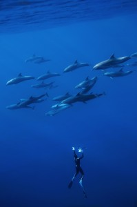 6_dolphins.borde