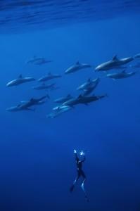 6_dolphins.borde