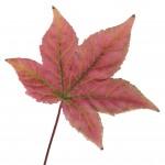 Plants That Say 'Autumn'