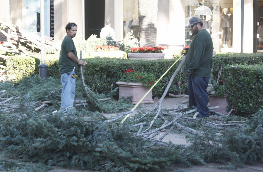 Workers install the Fashion Island Christmas tree  — NB Indy photo ©