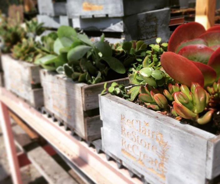 Newport Banning Land Trust nursery plants — Photo courtesy Newport Banning Land Trust