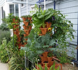 Hydro Garden