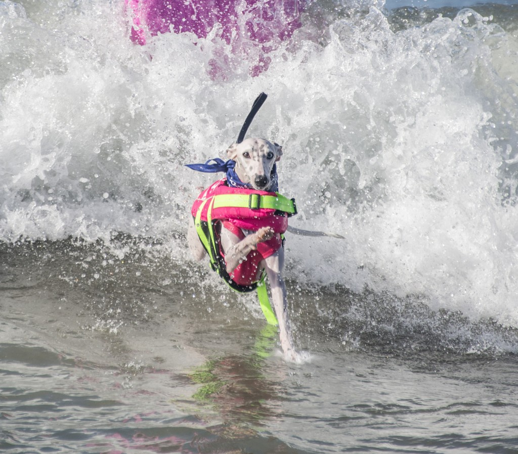 Dog Surfing (4)