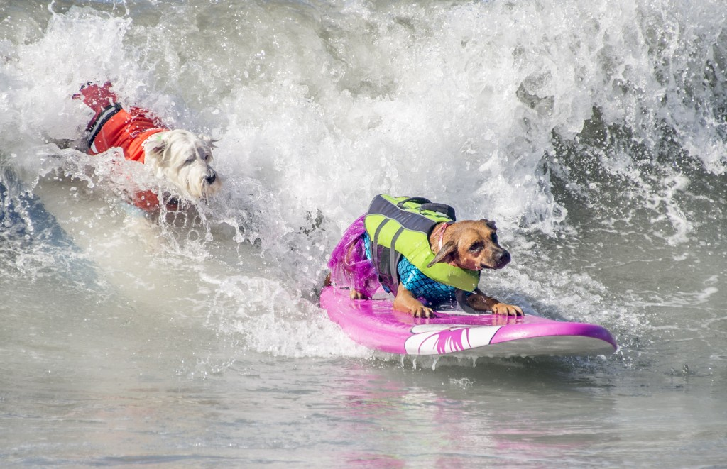 Dog Surfing (5)