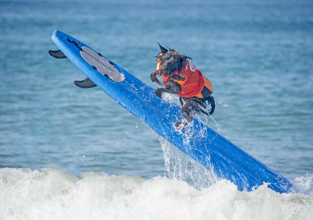 Dog Surfing (8)