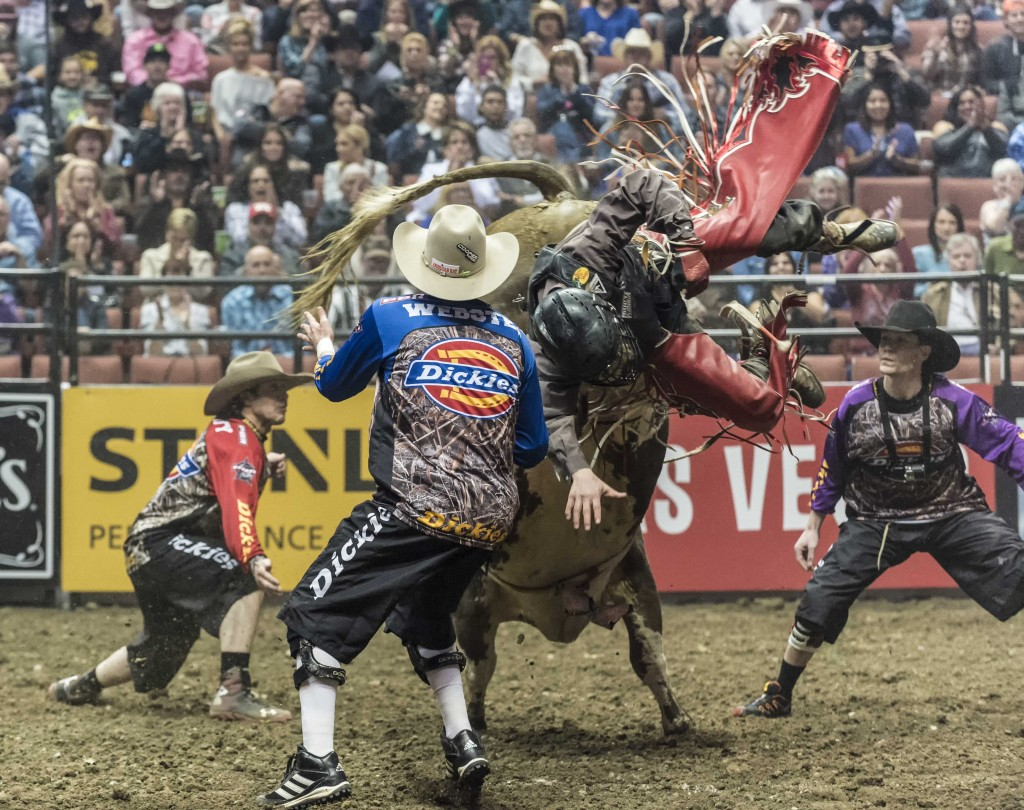 A rider flies off the back of a bull as PBR fighters try and distract the large animal. — Photo by Lawrence Sherwin ©