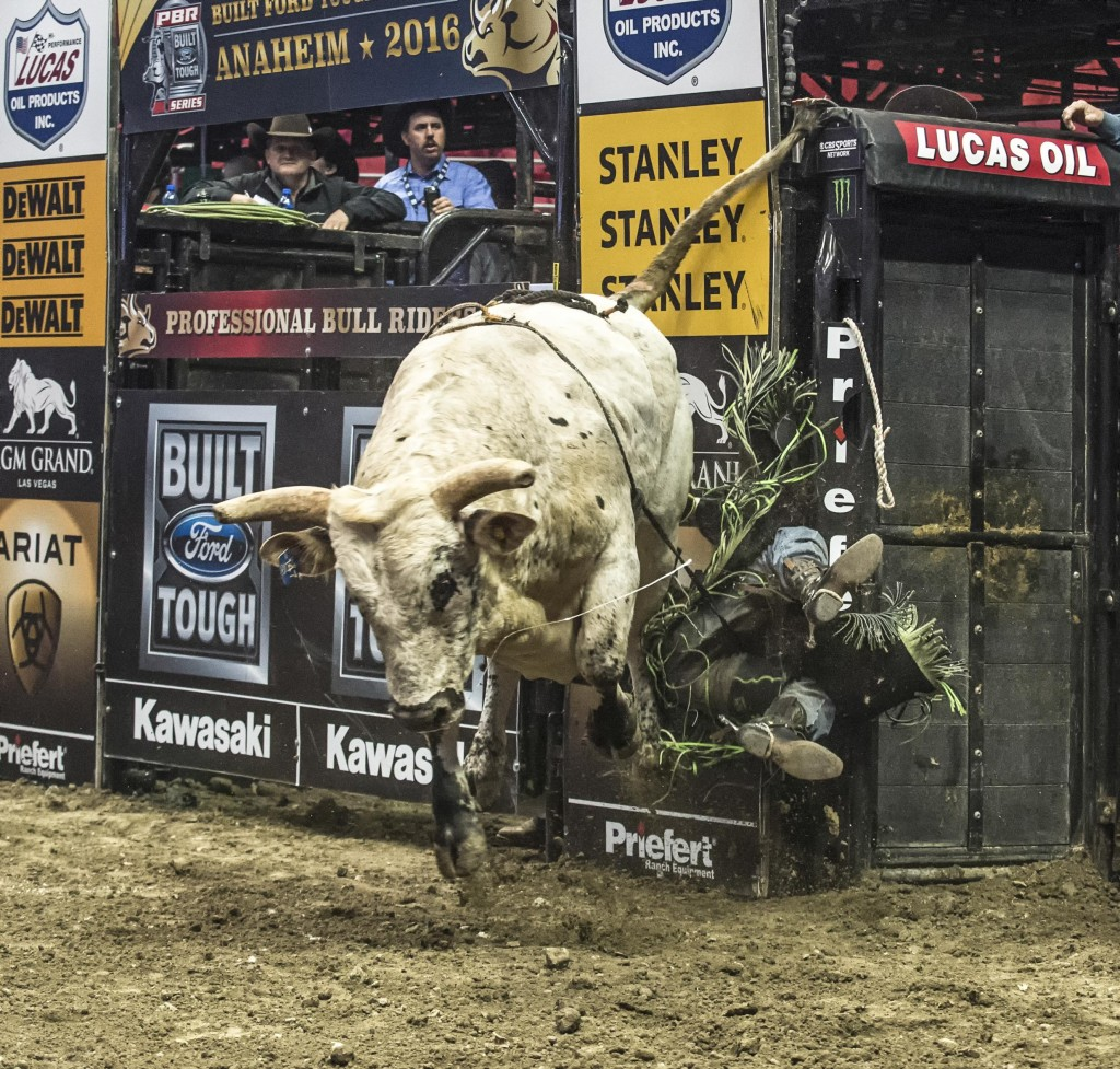 A rider falls off a bull during the event. — Photo by Lawrence Sherwin ©