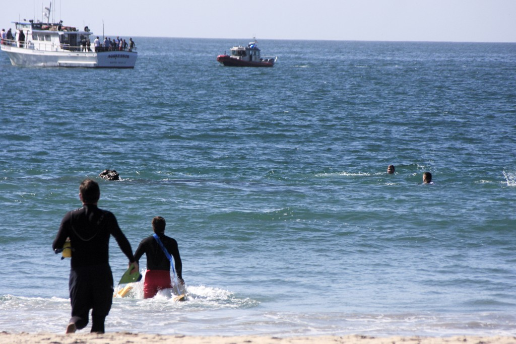 "Newport Beach lifeguards rush into the water to help the first ""victims"" out of mock disaster. — Photo by Sara Hall ©"