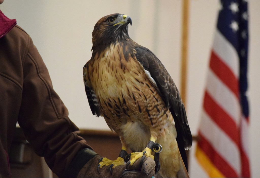 Hank, a red-tailed hawk, visit's the first graders at Harbor Day School as part of the Traveling Scientist program. — Photo courtesy Harbor Day School/Noelle Becker ©