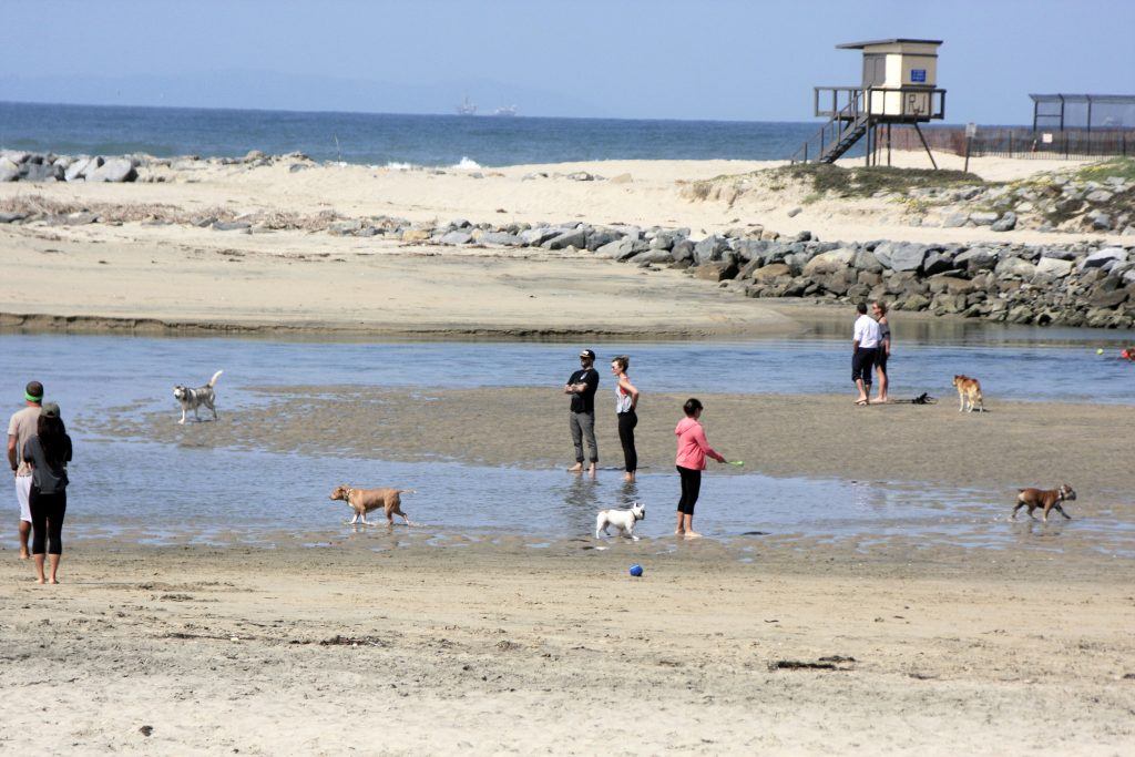 Off leash dogs and their owners walk along the unofficial dog beach at the Santa Ana River mouth. — Photo by Sara Hall ©