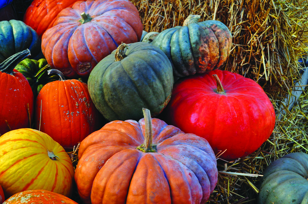 A stack of heirloom pumpkins. — Photo courtesy Armstrong Garden Centers ©