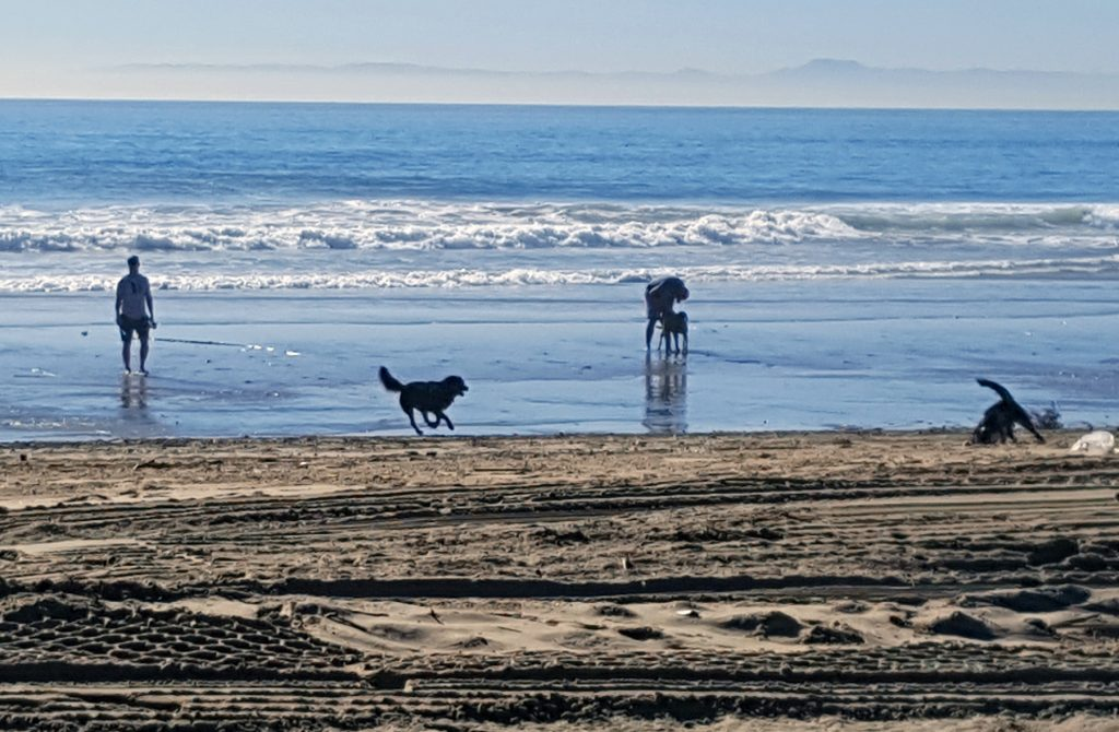 Dogs run and play on the beach near the Santa Ana River mouth in Newport Beach Wednesday after most, if not all, of the hypodermic needles that had been washed down the storm drain by the recent rain were cleaned up. — Photo by Christopher Trela ©