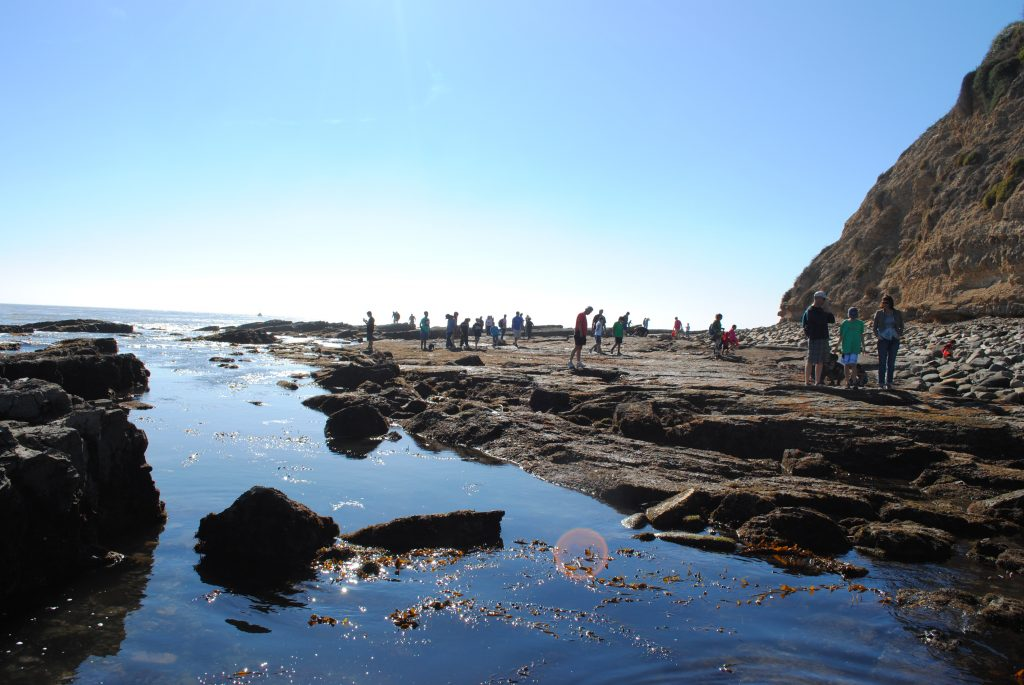 Rocky intertidal areas, as shown in this undated photo, are popular destinations and make up a quarter of the South Coast region of California. — Photo by Sarah Finstad ©