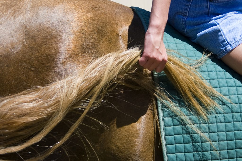 Michelle Hoops grabs a hold of the long tail of Peanut, her favorite horse to ride at the Back Bay Therapeutic Riding Club, on July 14. She held on for 10 seconds as part of her therapy session with the program. — Photo by Sara Hall ©