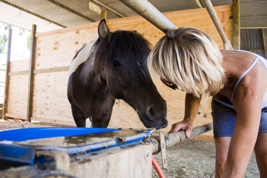 Vickie Tombrello leans down and almost touches noses with Blue, the only pony at the Back Bay Therapeutic Riding Club in Newport Beach, while filling his dish with fresh water. — Photo by Sara Hall ©
