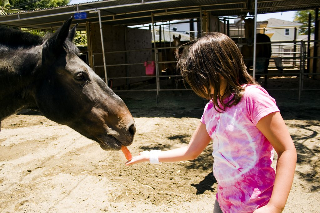 Karoline Shannon, 9, feeds a carrot to Babe, her favorite horse at Back Bay Therapeutic Riding Club, after her riding session with him. Founder of BBTRC, Bernadette Olsen, said she thinks it's important the riders get to feed, groom and interact with the horses and they often form a special bond. — Photo by Sara Hall ©
