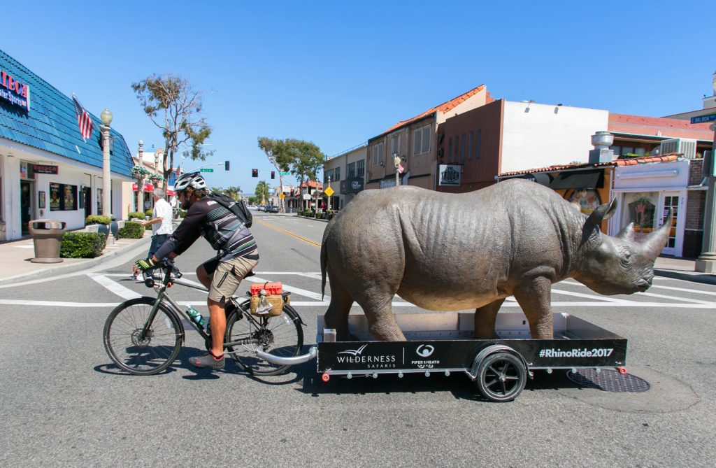 Conservationist and cyclist Matt Meyer riding and towing a fiberglass rhinoceros through Newport Beach on Tuesday in an effort to raise awareness and funding for rhinoceros conservation in Africa. — Photo by Jim Collins ©
