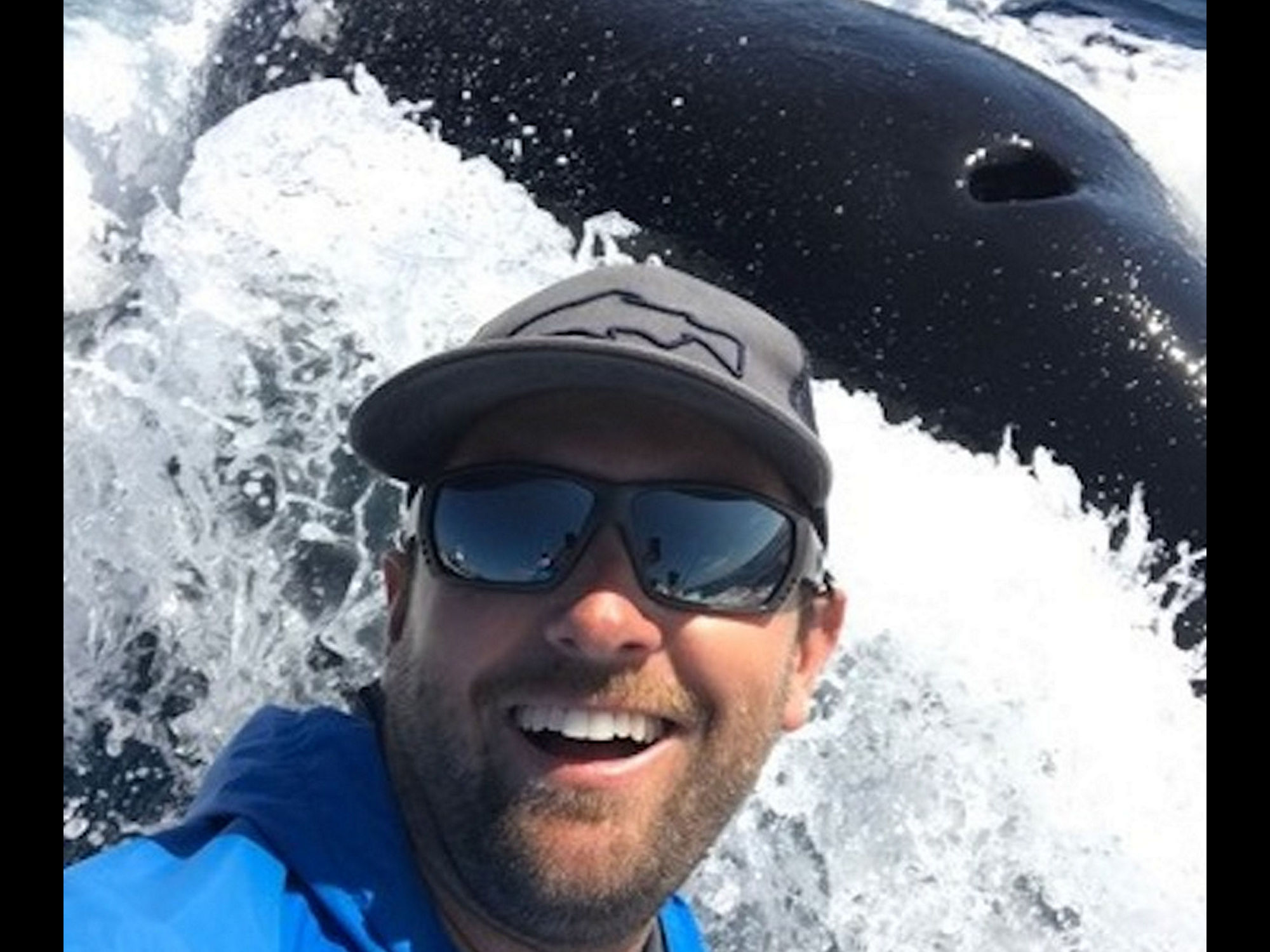 Local Captain Snaps Orca 'Selfie' - Newport Beach News